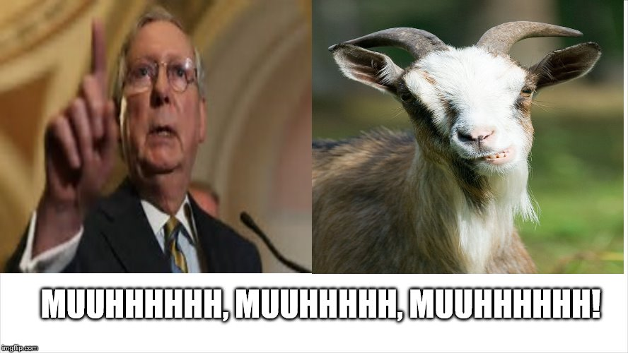 mitch mcconnell: the mumbling grumbling old goat! | MUUHHHHHH, MUUHHHHH, MUUHHHHHH! | image tagged in old goat,mitch mcconnell,mitch mcconnell is an old goat,scumbag republicans,mitch mcconnell zero,clown car republicans | made w/ Imgflip meme maker