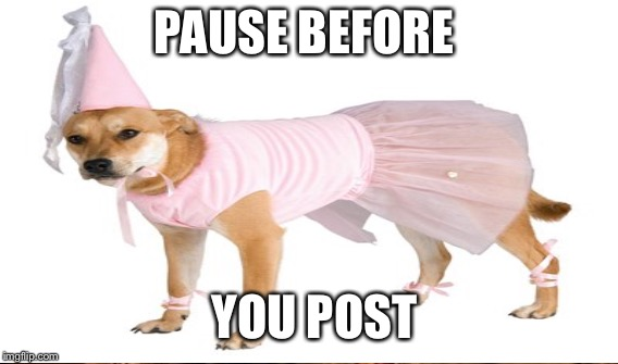 Princess Dog | PAUSE BEFORE YOU POST | image tagged in memes | made w/ Imgflip meme maker