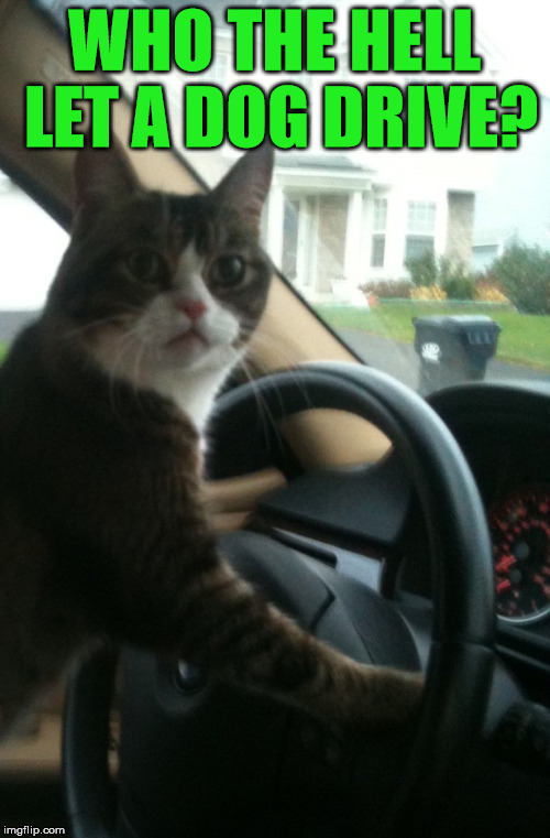 JoJo The Driving Cat | WHO THE HELL LET A DOG DRIVE? | image tagged in jojo the driving cat | made w/ Imgflip meme maker