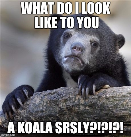 Confession Bear Meme | WHAT DO I LOOK LIKE TO YOU A KOALA SRSLY?!?!?! | image tagged in memes,confession bear | made w/ Imgflip meme maker