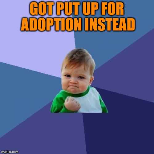 Success Kid Meme | GOT PUT UP FOR ADOPTION INSTEAD | image tagged in memes,success kid | made w/ Imgflip meme maker