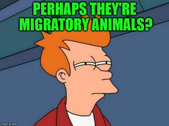 Futurama Fry Meme | PERHAPS THEY'RE MIGRATORY ANIMALS? | image tagged in memes,futurama fry | made w/ Imgflip meme maker