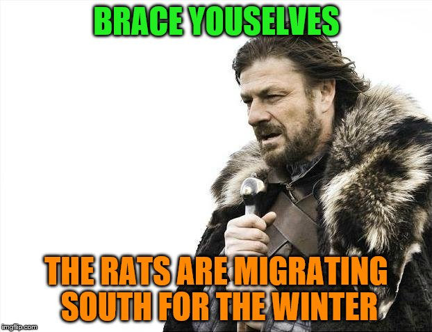 Brace Yourselves X is Coming Meme | BRACE YOUSELVES THE RATS ARE MIGRATING SOUTH FOR THE WINTER | image tagged in memes,brace yourselves x is coming | made w/ Imgflip meme maker