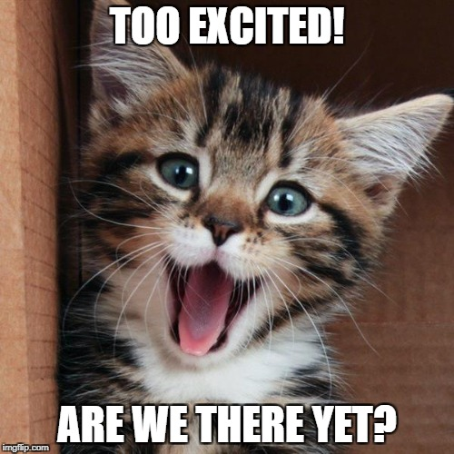 Excited kitten | TOO EXCITED! ARE WE THERE YET? | image tagged in animals,excited cat | made w/ Imgflip meme maker