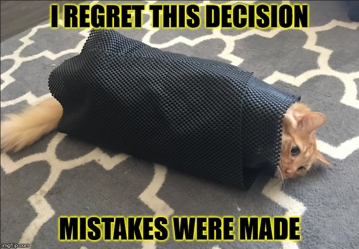 Cat Wrap |  I REGRET THIS DECISION; MISTAKES WERE MADE | image tagged in oops,misery,mistakes were made,instant and lingering regret,and that's all i have to say about that,roll safe think about it | made w/ Imgflip meme maker