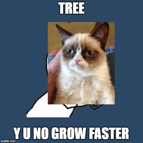 Y U No Meme | TREE Y U NO GROW FASTER | image tagged in memes,y u no | made w/ Imgflip meme maker