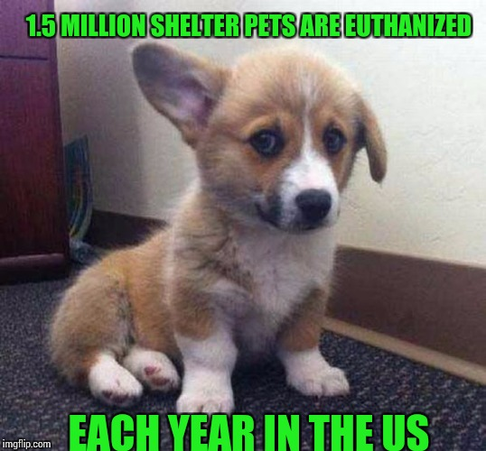 All they need is a loving home. Depressing Meme Week ( A NeverSayMemes event) | 1.5 MILLION SHELTER PETS ARE EUTHANIZED EACH YEAR IN THE US | image tagged in depressing meme week | made w/ Imgflip meme maker