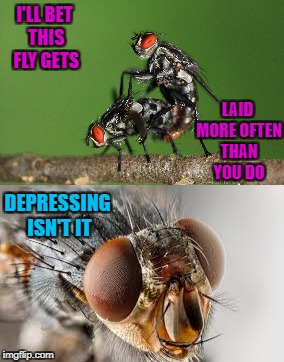 Depressing Meme Week Oct 11-18 A NeverSayMemes Event | I'LL BET THIS FLY GETS LAID MORE OFTEN THAN YOU DO DEPRESSING ISN'T IT | image tagged in flies,memes,depressing meme week,funny,insects | made w/ Imgflip meme maker
