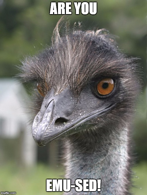 ARE YOU EMU-SED! | image tagged in emu-sed | made w/ Imgflip meme maker