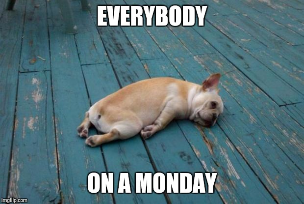 Tired dog | EVERYBODY ON A MONDAY | image tagged in tired dog | made w/ Imgflip meme maker