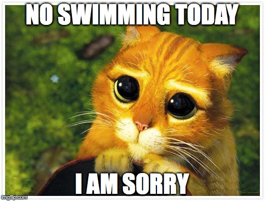 Sorry Kitty | NO SWIMMING TODAY I AM SORRY | image tagged in sorry kitty | made w/ Imgflip meme maker