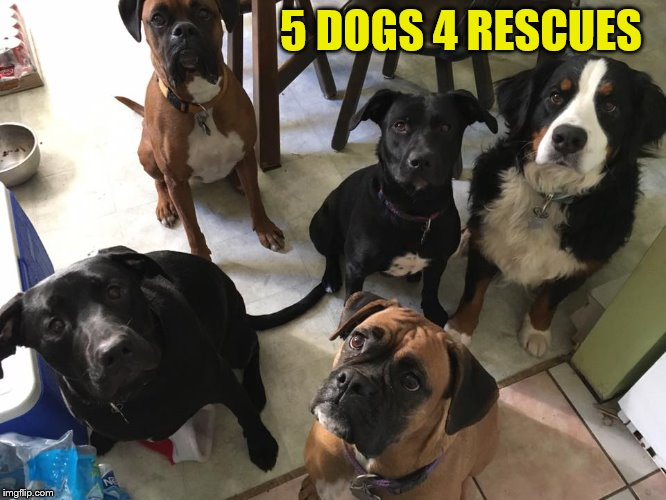 5 DOGS 4 RESCUES | made w/ Imgflip meme maker