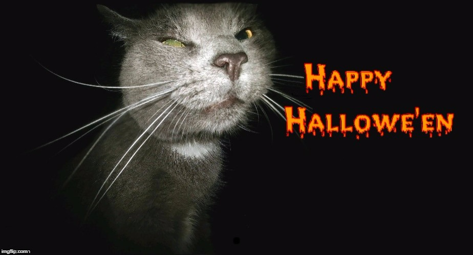 Special Thanks to DeedsterDoo | . | image tagged in cat,kitty,halloween,happy halloween,happy,love | made w/ Imgflip meme maker
