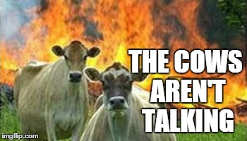 THE COWS AREN'T TALKING | made w/ Imgflip meme maker
