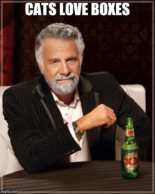 The Most Interesting Man In The World Meme | CATS LOVE BOXES | image tagged in memes,the most interesting man in the world | made w/ Imgflip meme maker