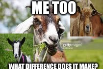 What About The Kids? | ME TOO WHAT DIFFERENCE DOES IT MAKE? | image tagged in goat,radical islam,punk,college liberal,feminism | made w/ Imgflip meme maker