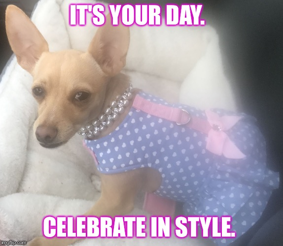 IT'S YOUR DAY. CELEBRATE IN STYLE. | image tagged in emmy g | made w/ Imgflip meme maker