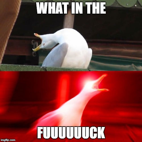 WHAT IN THE FUUUUUUCK | image tagged in inhaling seagull,inhaling seagull 4 red,what in the fuck,meme | made w/ Imgflip meme maker