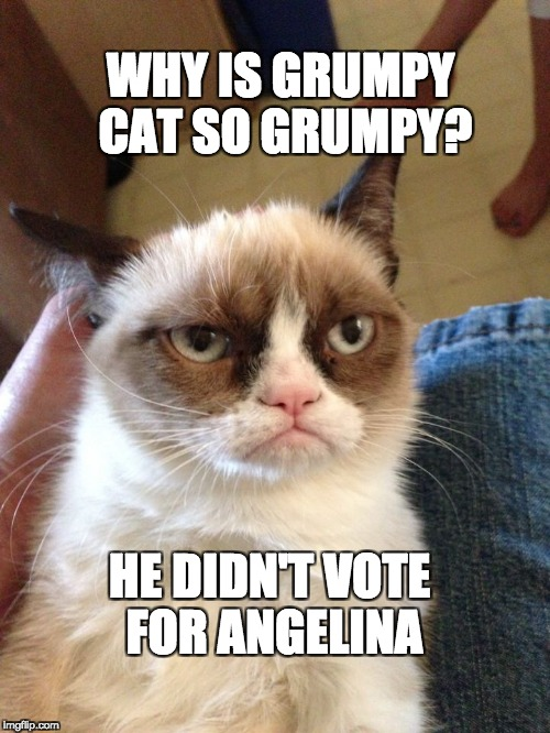 WHY IS GRUMPY CAT SO GRUMPY? HE DIDN'T VOTE FOR ANGELINA | image tagged in grumpy cat | made w/ Imgflip meme maker