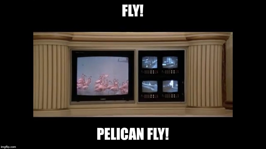 FLY! PELICAN FLY! | image tagged in fly pelican fly | made w/ Imgflip meme maker