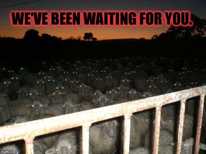 Spooky Sheep  | WE'VE BEEN WAITING FOR YOU. | image tagged in halloween | made w/ Imgflip meme maker