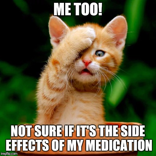 kitten facepalm | ME TOO! NOT SURE IF IT'S THE SIDE EFFECTS OF MY MEDICATION | image tagged in kitten facepalm | made w/ Imgflip meme maker