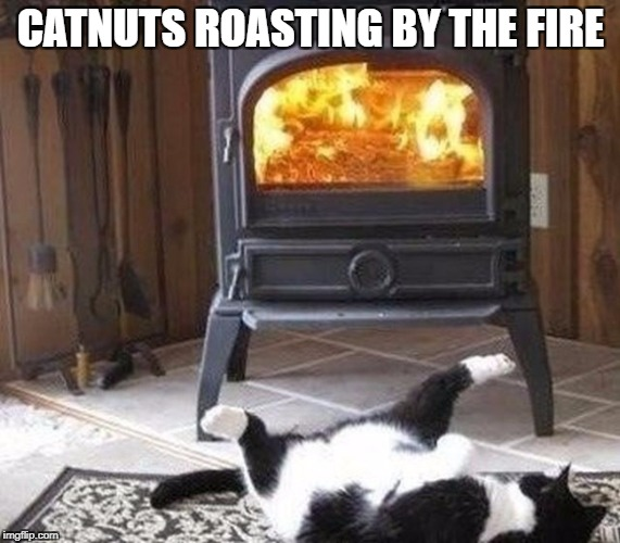 Catnuts | CATNUTS ROASTING BY THE FIRE | image tagged in catnuts roasting by the fire,cat by the fire,funny cat | made w/ Imgflip meme maker