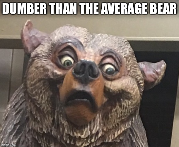 DUMBER THAN THE AVERAGE BEAR | image tagged in scary maskot bear | made w/ Imgflip meme maker