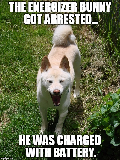 THE ENERGIZER BUNNY GOT ARRESTED... HE WAS CHARGED WITH BATTERY. | image tagged in laughing shiba inu,bad pun dog,bad pun,bad joke,memes,funny memes | made w/ Imgflip meme maker