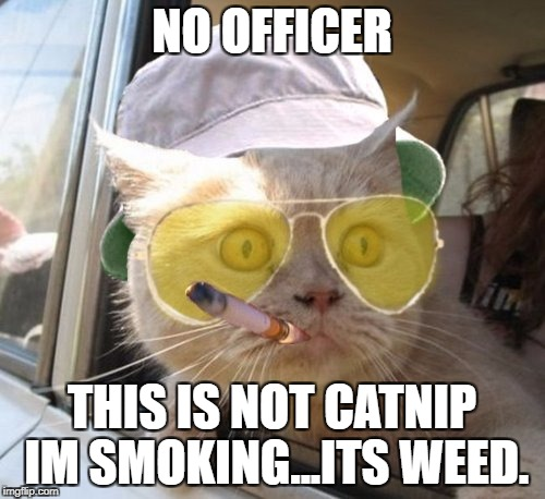Fear And Loathing Cat | NO OFFICER THIS IS NOT CATNIP IM SMOKING...ITS WEED. | image tagged in memes,fear and loathing cat | made w/ Imgflip meme maker