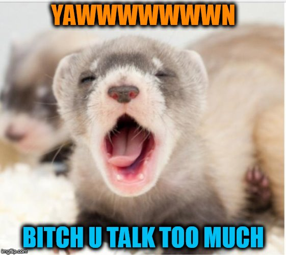 Ferret sleepy | YAWWWWWWWN B**CH U TALK TOO MUCH | image tagged in ferret sleepy | made w/ Imgflip meme maker