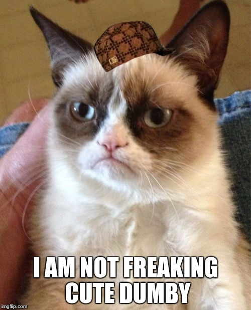 Grumpy Cat Meme | I AM NOT FREAKING CUTE DUMBY | image tagged in memes,grumpy cat,scumbag | made w/ Imgflip meme maker