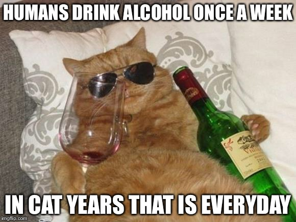 Cat years: the meownologue | HUMANS DRINK ALCOHOL ONCE A WEEK IN CAT YEARS THAT IS EVERYDAY | image tagged in funny cat birthday | made w/ Imgflip meme maker