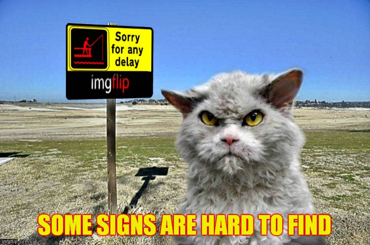 imgflip sorry with pompous cat | SOME SIGNS ARE HARD TO FIND | image tagged in imgflip sorry with pompous cat | made w/ Imgflip meme maker