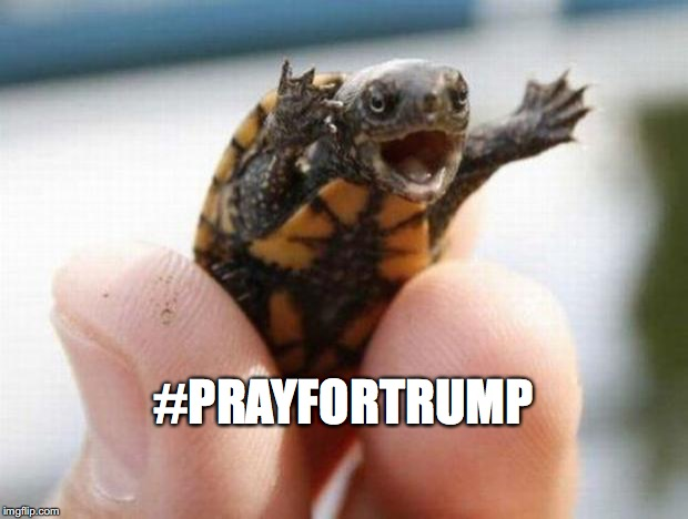happy baby turtle | #PRAYFORTRUMP | image tagged in happy baby turtle | made w/ Imgflip meme maker