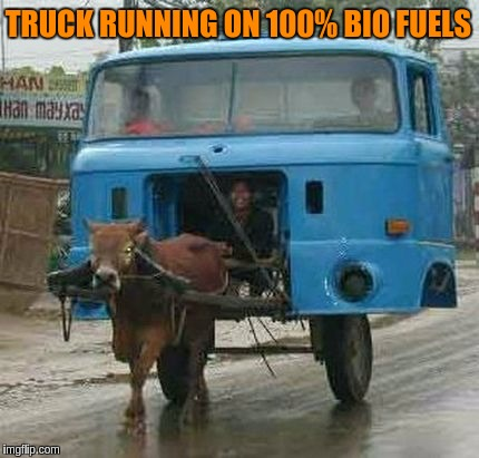 Doing it for the environment.  (^o_o^) | TRUCK RUNNING ON 100% BIO FUELS | image tagged in memes,funny,trucks,cows,bio fuels,india | made w/ Imgflip meme maker