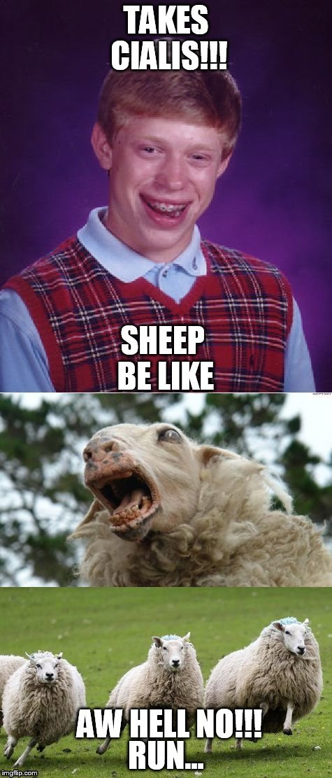 Brian on Cialis | RUN... | image tagged in sheep on the run,scared sheepless,blb sheep scary | made w/ Imgflip meme maker