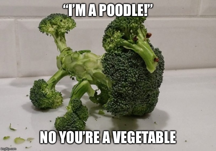 "Poodle veggie | ""I'M A POODLE!"" NO YOU'RE A VEGETABLE 