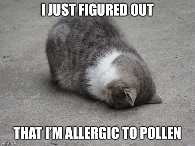 Cat sadness | I JUST FIGURED OUT THAT I'M ALLERGIC TO POLLEN | image tagged in face plant cat | made w/ Imgflip meme maker