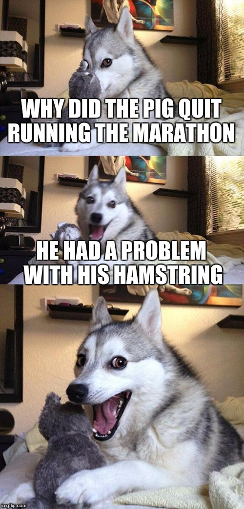 Bad Pun Dog Meme | WHY DID THE PIG QUIT RUNNING THE MARATHON HE HAD A PROBLEM WITH HIS HAMSTRING | image tagged in memes,bad pun dog | made w/ Imgflip meme maker