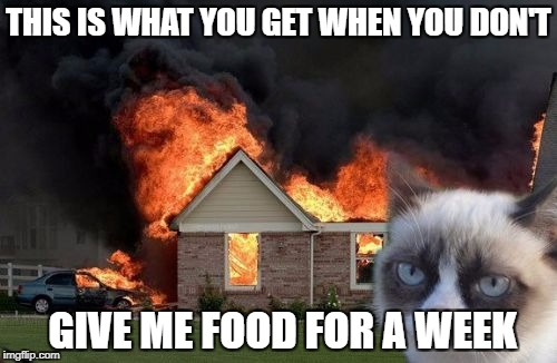 Burn Kitty Meme | THIS IS WHAT YOU GET WHEN YOU DON'T GIVE ME FOOD FOR A WEEK | image tagged in memes,burn kitty,grumpy cat | made w/ Imgflip meme maker
