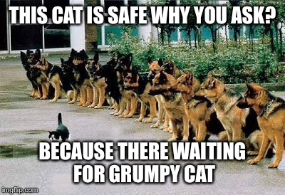 THIS CAT IS SAFE WHY YOU ASK? BECAUSE THERE WAITING FOR GRUMPY CAT | made w/ Imgflip meme maker