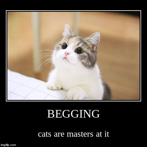 food? please? | BEGGING | cats are masters at it | image tagged in funny,demotivationals,cats | made w/ Imgflip demotivational maker