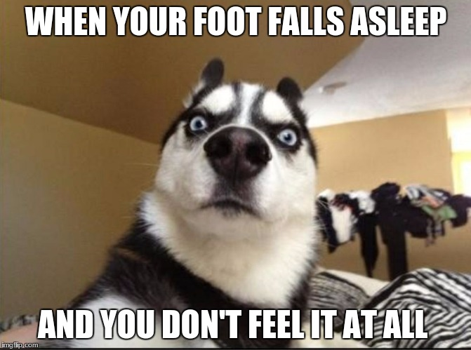 WHEN YOUR FOOT FALLS ASLEEP AND YOU DON'T FEEL IT AT ALL | image tagged in stunned dog | made w/ Imgflip meme maker
