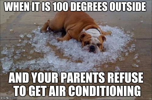 WHEN IT IS 100 DEGREES OUTSIDE AND YOUR PARENTS REFUSE TO GET AIR CONDITIONING | image tagged in funny dog | made w/ Imgflip meme maker