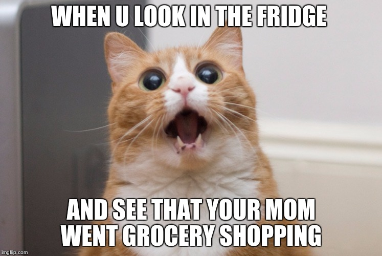 Amazed cat | WHEN U LOOK IN THE FRIDGE AND SEE THAT YOUR MOM WENT GROCERY SHOPPING | image tagged in amazed cat | made w/ Imgflip meme maker
