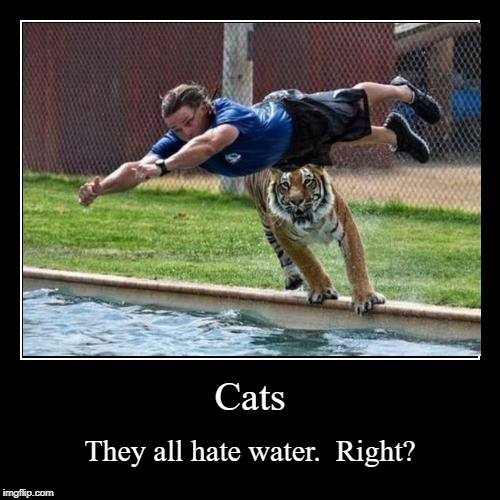 Cats | They all hate water.  Right? | image tagged in funny,demotivationals | made w/ Imgflip demotivational maker