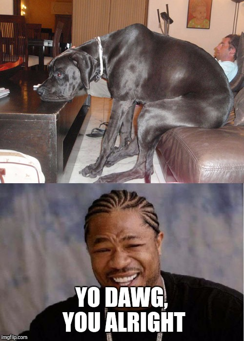 YO DAWG, YOU ALRIGHT | image tagged in yo dawg | made w/ Imgflip meme maker
