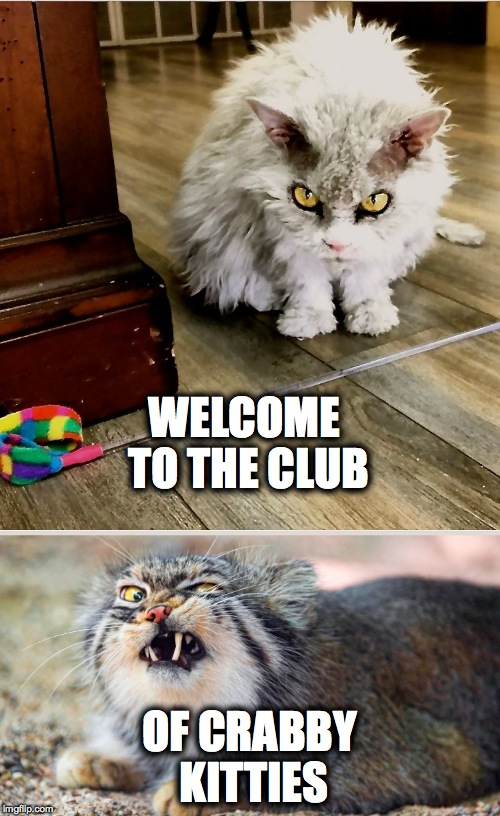 WELCOME TO THE CLUB OF CRABBY KITTIES | made w/ Imgflip meme maker