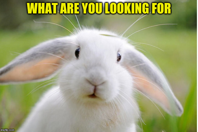 WHAT ARE YOU LOOKING FOR | made w/ Imgflip meme maker
